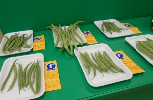 Green beans at the county fair.