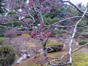 Japanese Garden at CWU