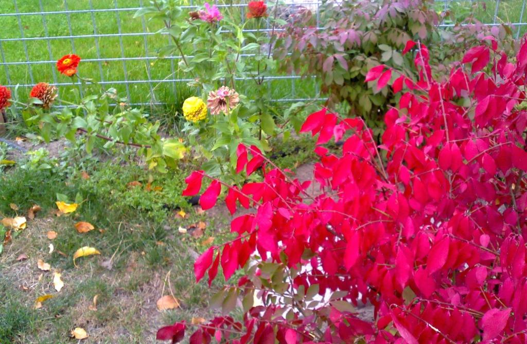 flowers and shrub
