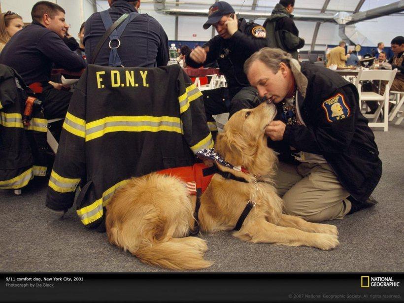 comfort dog on 9-11