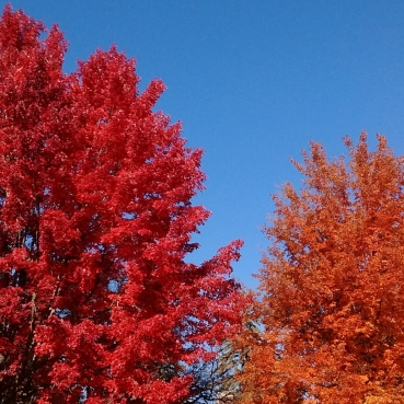 Trees in fall colors of bright red, orange, and gold set against a bright blue sky.